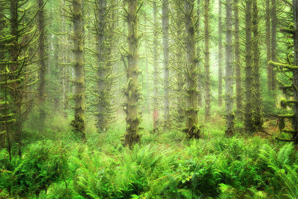 Wall Art - Photograph - Lush Forest  by Nicki Frates