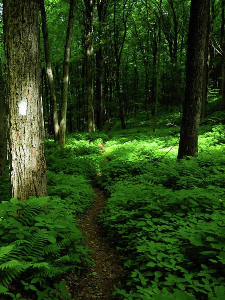 Photograph - Lush Green At 2 by Raymond Salani III