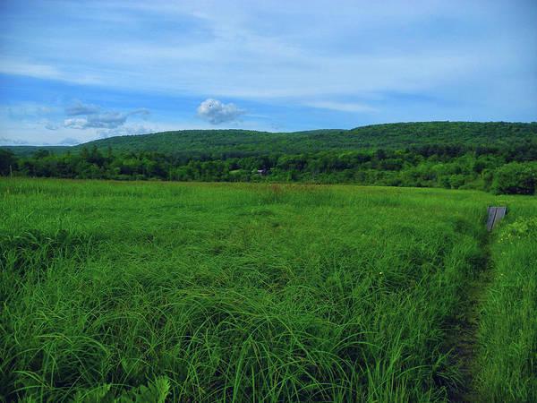 Photograph - Lush Green Marsh And Farm by Raymond Salani III