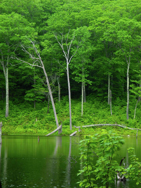 Photograph - Lush Green Pond by Raymond Salani III