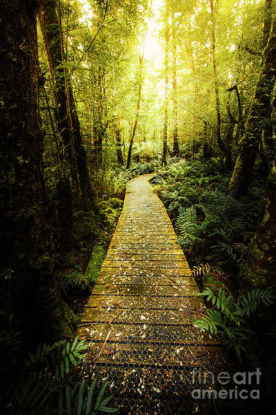 Rain Forest Photograph - Lush Green Rainforest Walk by Jorgo Photography - Wall Art Gallery