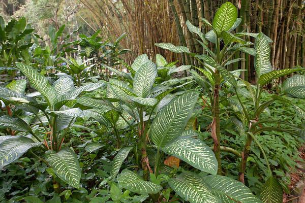 Photograph - Lush Greenery In Rio De Janeiro Botanical Gardens by Aivar Mikko