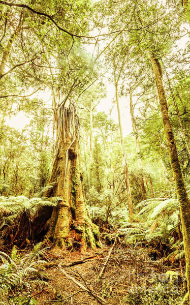 Photograph - Lush Tasmanian Forestry by Jorgo Photography - Wall Art Gallery