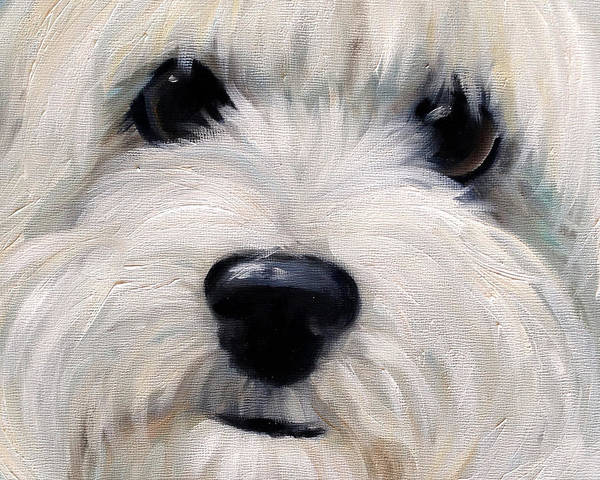 Maltipoo Wall Art - Painting - LUV by Mary Sparrow