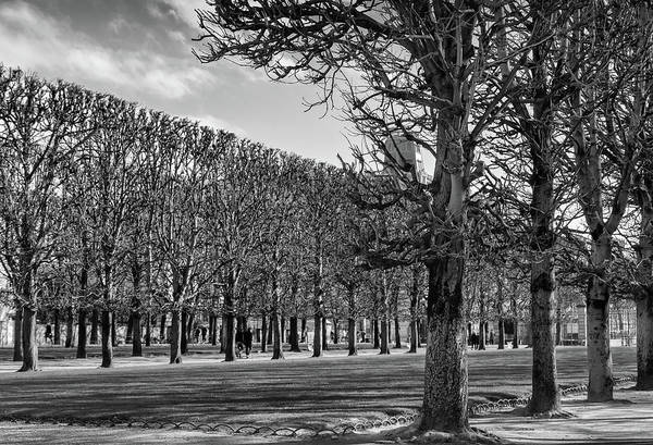 Wall Art - Photograph - Luxembourg Trees In Winter by Georgia Fowler