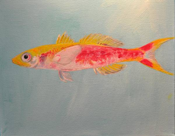 Painting - Luzonichthys Seaver by Eduard Meinema