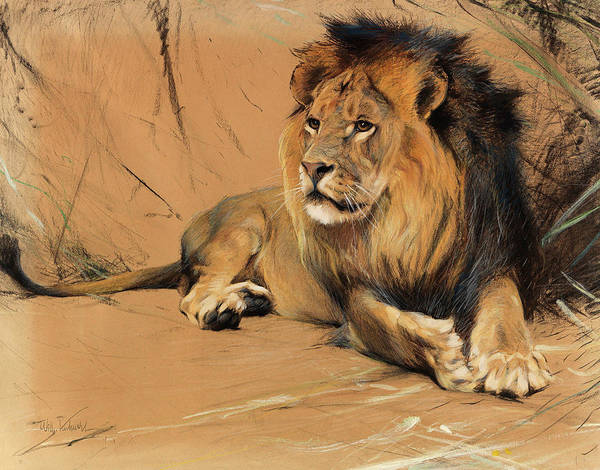 Mountain Lion Painting - Lying Lion by Friedrich Wilhelm Kuhnert