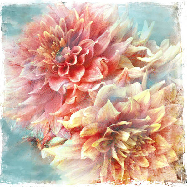 Photograph - Lynia Dahlia by Jill Love