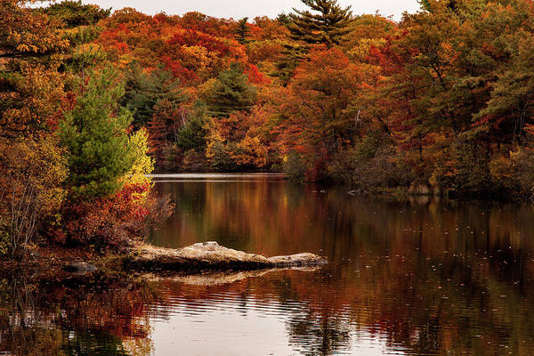 Photograph - Lynn Woods Birch Pond Fall Colors by Jeff Folger