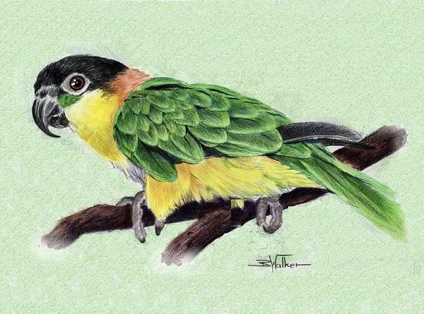 Green Parrot Drawing - Lynne's Parrot by Barbara Walker