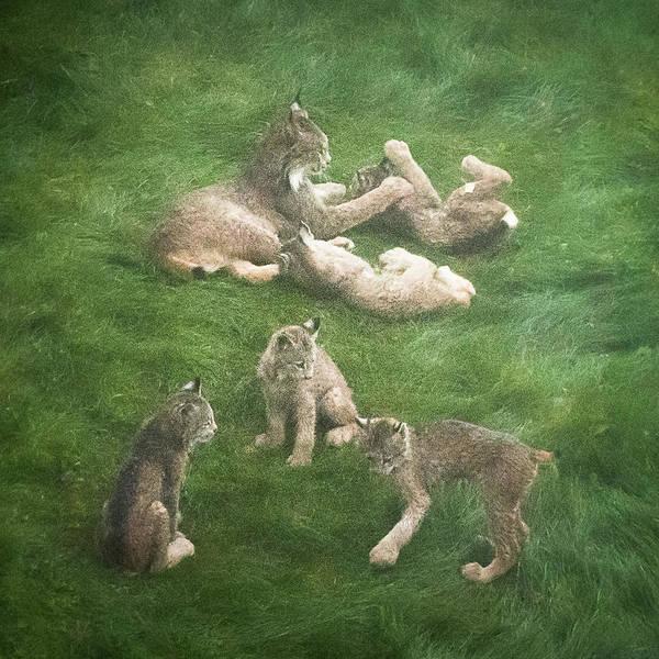Lynx In The Mist Art Print
