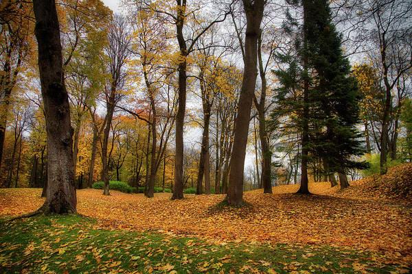 Photograph - Lysaker Woods by Ross Henton