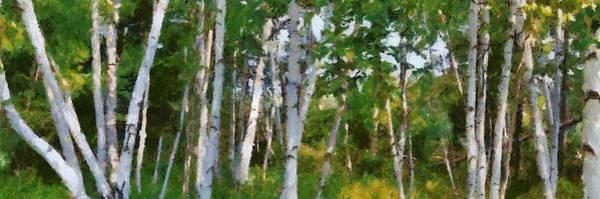 Wall Art - Photograph - M-22 Birches by Michelle Calkins