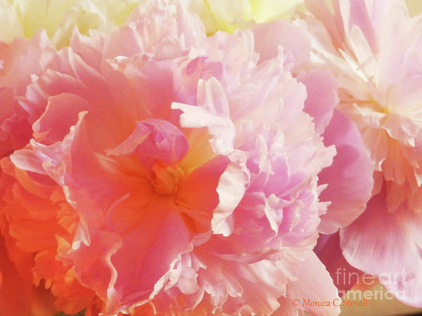 Photograph - M Shades Of Pink Flowers Collection No. P74 by Monica C Stovall