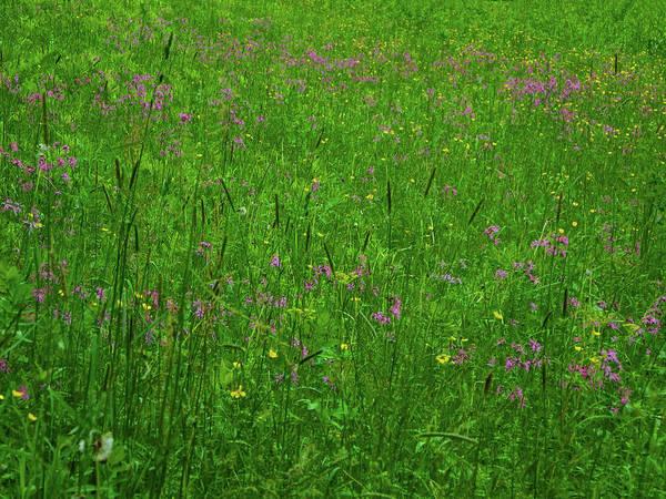 Photograph - Ma At Wildflowers by Raymond Salani III
