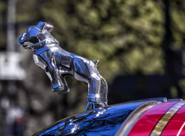 Mac Photograph - Mac Truck Bulldog Hood Ornament by Robert Ullmann