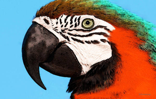 Wall Art - Painting - Macaw Bird - Rain Forest Royalty by Sharon Cummings
