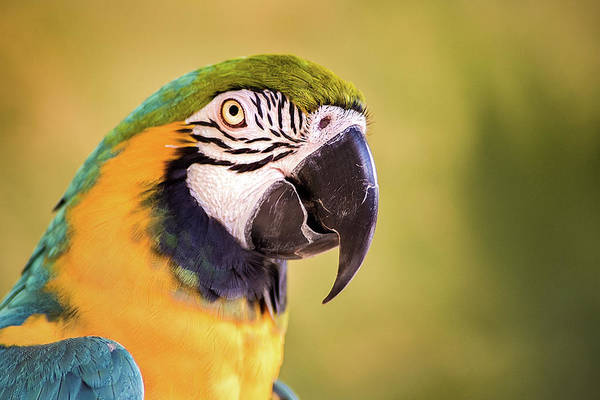 Photograph - Macaw by Don Johnson