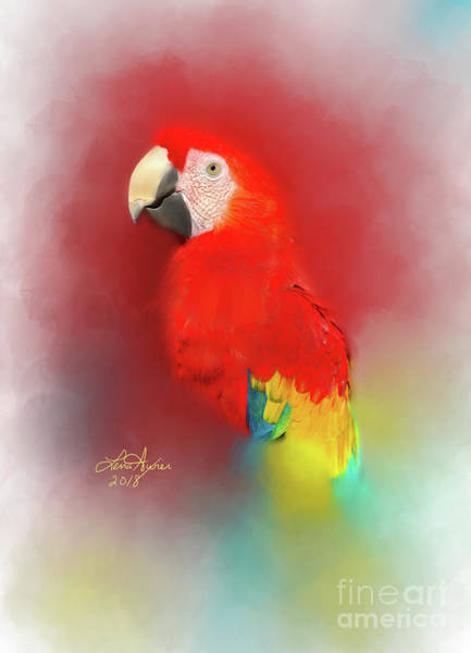 Parrot Digital Art - Macaw by Lena Auxier