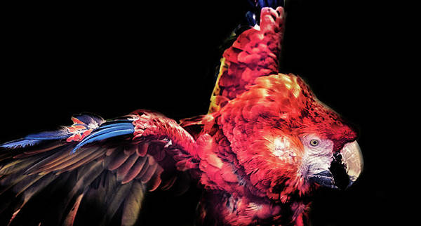 Macaw Photograph - Macaw Parrot by Martin Newman