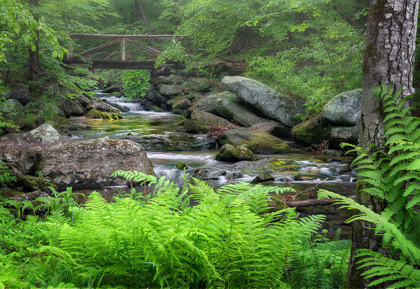 Photograph - Macedonia Brook State Park by Bill Wakeley
