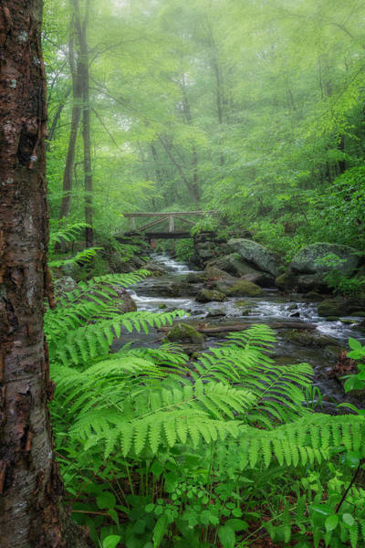 Photograph - Macedonia Brook State Park Portrait by Bill Wakeley
