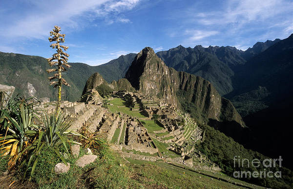 Photograph - Machu Picchu And Bromeliad by James Brunker