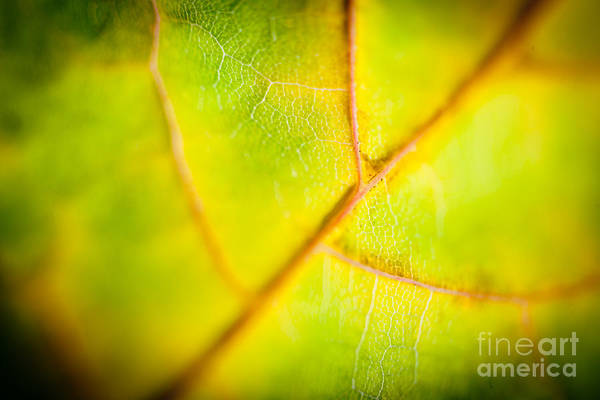 Photograph - Macro Abstract Autumn Leaves by Raimond Klavins