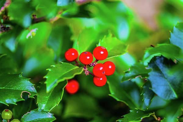 Photograph - Macro Berries - 1202 by G L Sarti