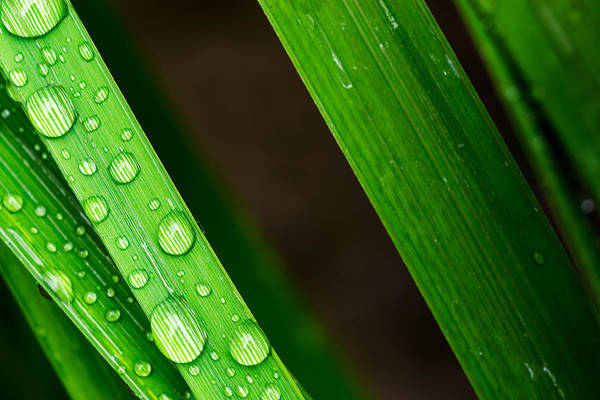 Photograph - Macro Closeup Of Waterdrops On A Leaf by John Williams