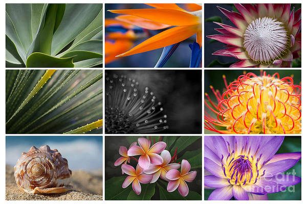 Photograph - Macro Collage by Sharon Mau