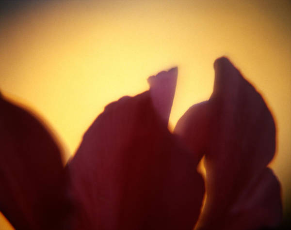 Photograph - Macro Flower by Lee Santa