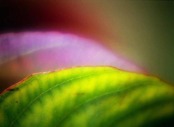 Photograph - Macro Leaf by Lee Santa