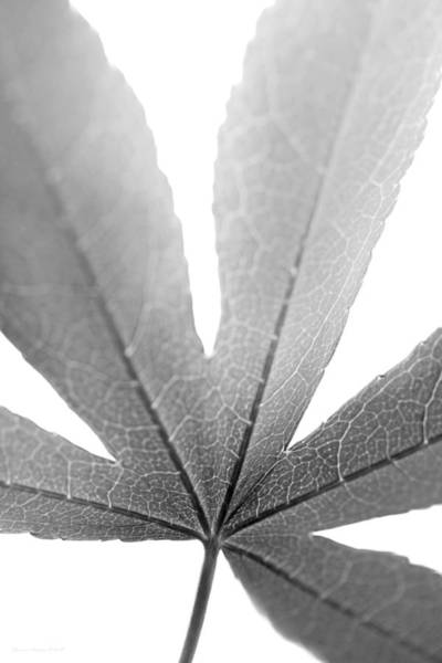 Wall Art - Photograph - Macro Leaf Monochrome Vertical by Jennie Marie Schell