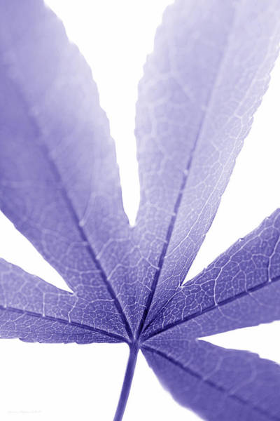 Wall Art - Photograph - Macro Leaf Purple Vertical by Jennie Marie Schell