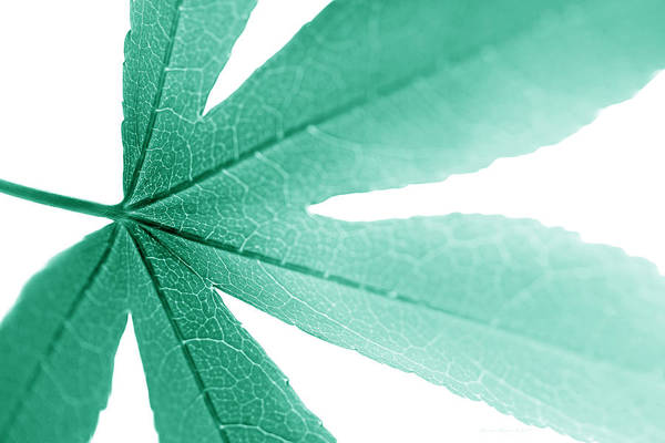 Wall Art - Photograph - Macro Leaf Teal by Jennie Marie Schell