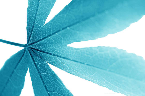 Wall Art - Photograph - Macro Leaf Turquoise by Jennie Marie Schell
