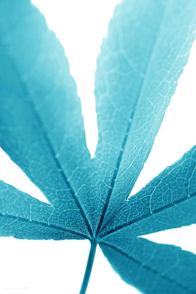 Wall Art - Photograph - Macro Leaf Turquoise Vertical by Jennie Marie Schell