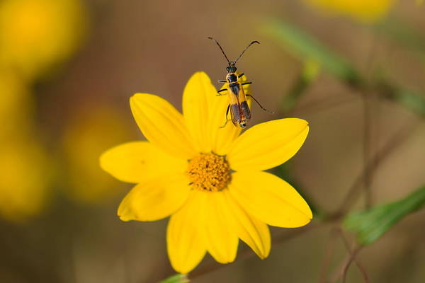 Wall Art - Photograph - Macro Of A Bug On A Flower by Jeff Swan