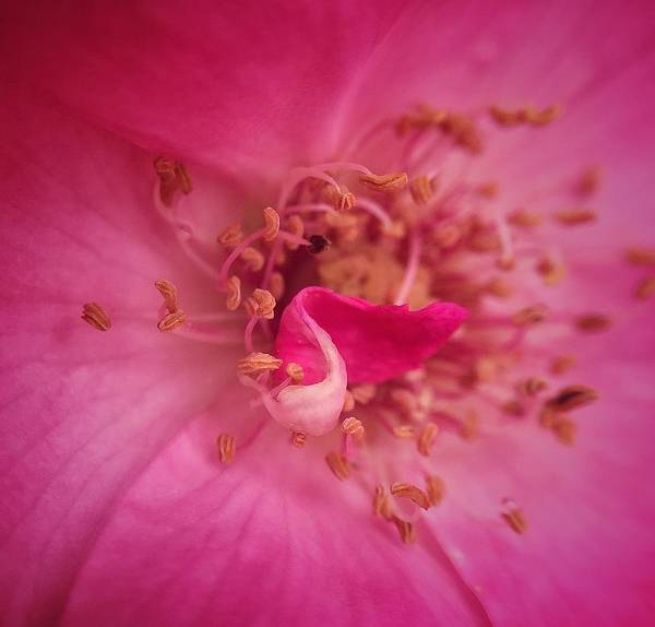 Caudillo Photograph - Macro Of A Flower by Charles Caudillo