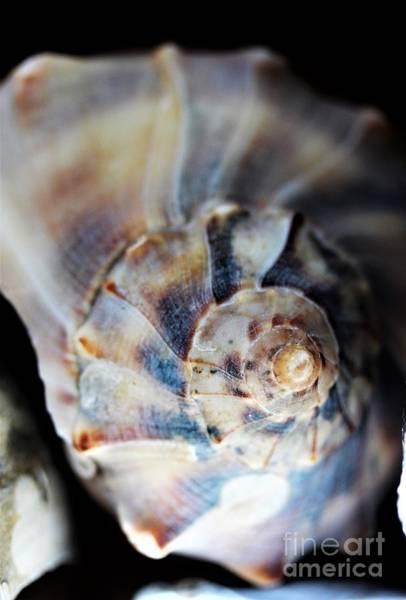 Wall Art - Photograph - Macro Of A Shell by Mesa Teresita