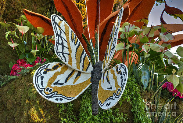 Tournament Of Roses Photograph - Madame Butterfly by David Zanzinger