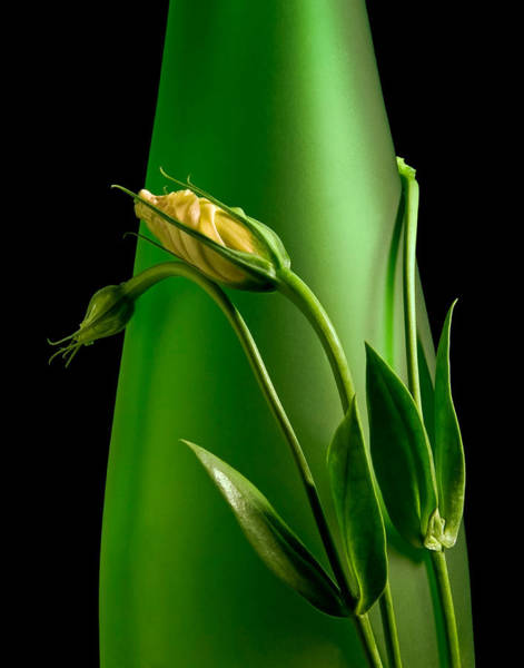 Floral Arrangement Photograph - Made For Each Other by Tom Mc Nemar
