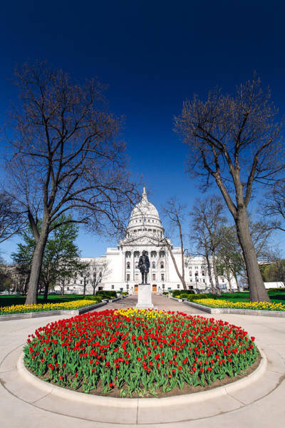 Photograph - Madison Capitol Tulips by Todd Klassy