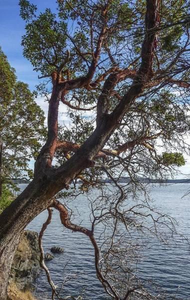Photograph - Madrona Tree On Sucia Island by NaturesPix