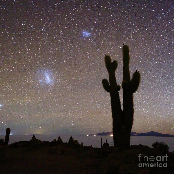Photograph - Magellanic Clouds And Forked Cactus Silhouette Salar De Uyuni Bolivia by James Brunker