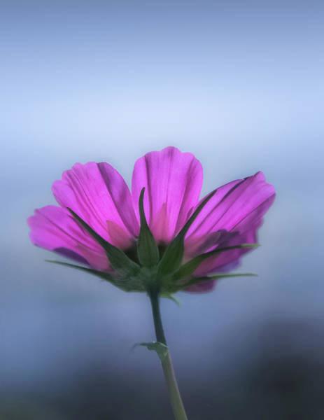 Magenta Photograph - Magenta by Joseph Smith
