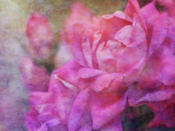 Photograph - Magenta Mist 0740 Idp_2 by Steven Ward