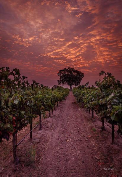 Photograph - Magenta Sunrise by Tim Bryan