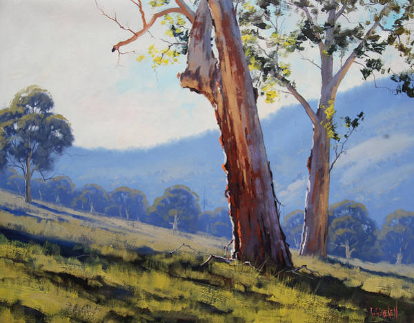 Old Tree Painting - Magestic Gum Tumut by Graham Gercken